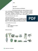 Folleto informativo sobre plantas suculentas.