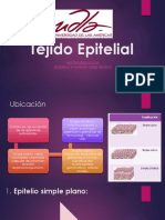 Tejido epitelial estructura