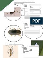 00000 Insectos Plaga