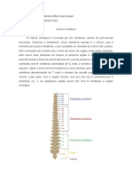 A Coluna Vertebral é Formada Por 33 Vértebras
