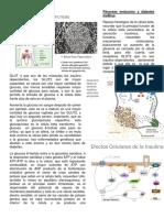 Páncreas-endocrino-y-diabetes-mellitus-1.docx