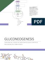Bioquimica Glucogenolisis y Gluconeogenesis