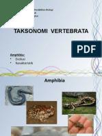 5-amphibia.pdf