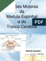 Funções Motoras Da Medula Espinhal e Do Tronco Cerebral