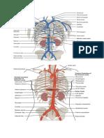 Tugas Anatomy