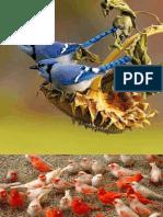 Emailing colour ful birds-1.pdf