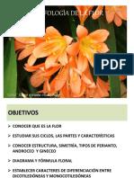 Morfologa de La Flor