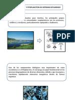 Fito y Zoo Sistema Estuarino