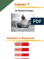 Cloning, Animal Transgenic, Antibodi Monoklonal