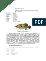 Biola Pertemuan-3 Mamalia-Laut 1
