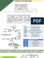 Biosíntesis de Carotenoides