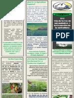 1. Dia Del No Uso de Agroquimicos