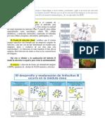 226933016-resumen-inmuno.pdf