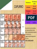 capurro.docx