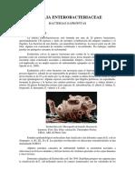 FAMILIA ENTEROBACTERIACEAE - Escherichia, Proteus, Morganella