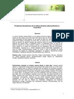Problemas Fitosanitarios De La Melina Gmelina ArboreaRox-5123192