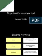 2.Organización Neurocortical