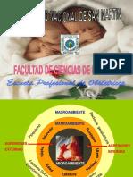 Placenta Madura. (1)