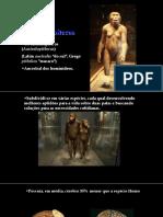 Australopitecos