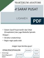 Resume Anatomi Ssp