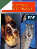 8668844 Parasito Caninos y Felinos