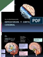 03hemisferiosycortezacerebrali-130816110733-phpapp01