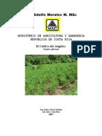 manual-jengibre-pz.pdf