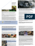Tesco butchers defenceless turtles