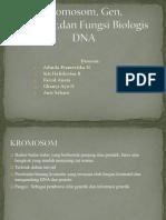 Kromosom, Gen, Struktur,dan Fungsi Biologis DNA.pptx