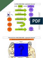 FISIOLOGÍA PRESENTACIÓN 22-05-15 Introducción al sistema endocrino.pdf