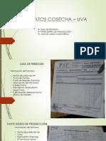 Formatos Cosecha – Uva