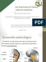 Embriología de Pulmón