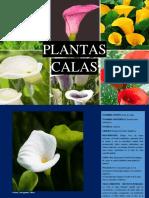 plantas-calas