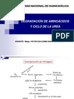 8. Degradación de Aminoácidos y Ciclo de La Urea