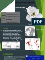FITOGEOGRAFIA - Familia Magnoliaceae