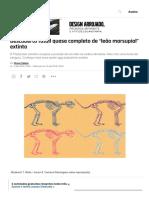"Descoberto Fóssil Quase Completo de ""Leão Marsupial"" Extinto _ Superinteressante"