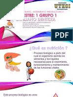 Nutrición , Nutrientes , Nutrimento Ynutracéutico Cynthia