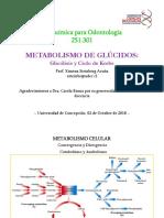 Glicolisis y Ciclo de Krebs