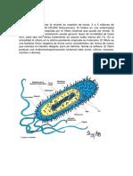 Monografia de Apidemiologiala Colera