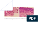 Normal Histology of Breast Tissue Consists of the Lobules