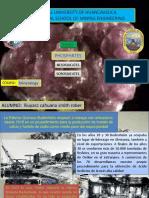 fosfatos mineralogia
