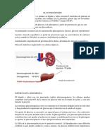Gluconeogenesis Expo (1)