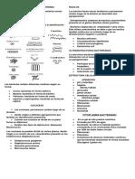 Morfologia y Estructura Bacteriana Hjv,Hj,Hj