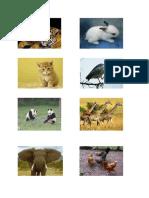 animasi hewan 1