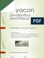 el yacon