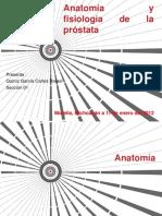 anatomiayfisiologiadelaprostata-130316151436-phpapp02