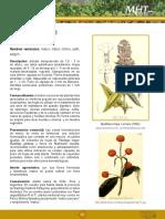 Matíco Pañil Propiedades Artículo.pdf