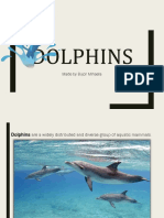 dolphins.pptx