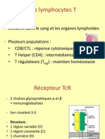 Lymphocytes T