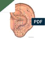 Auricular points.docx
